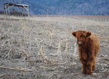 Covert Farms